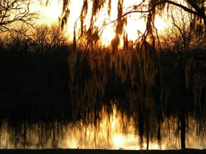 River Cities RV Park is near to the swamps in Louisiana